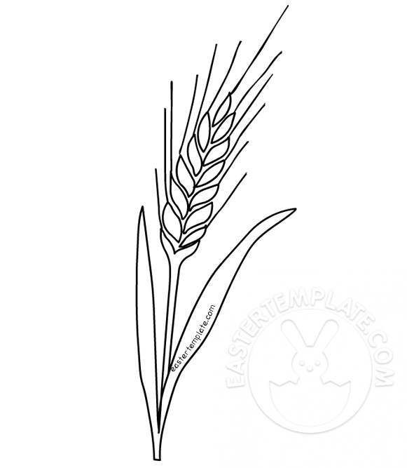 Wheat Coloring Page First Communion Easter Template